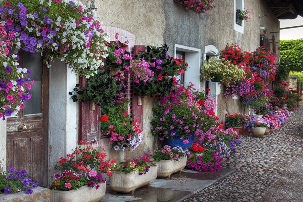 flower-decorated-house